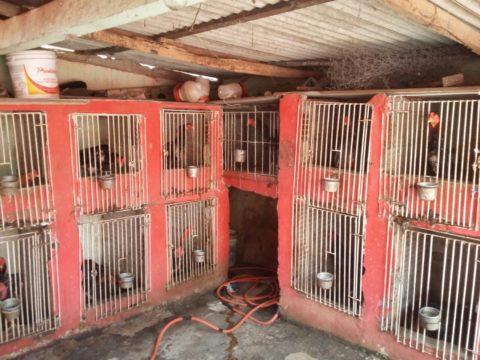 Policiais da 2ª Companhia do 29º BPM resgataram animais, que estavam presos. (Foto: Divulgação)