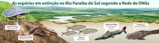 info_extincao-animais-do-paraiba