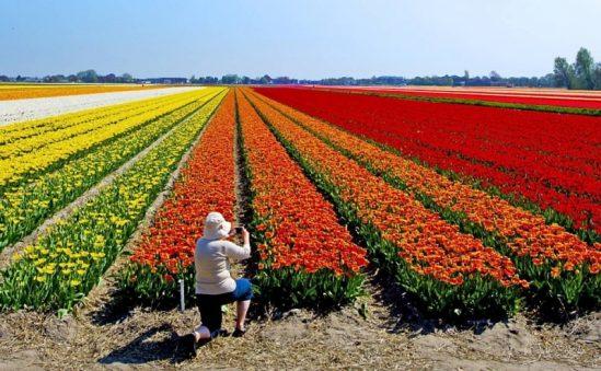 Festival De Flores De Holambra Previsto Para Acontecer Em