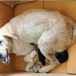 CCZ resgata cadelas que sofriam maus tratos no Parque Rosário