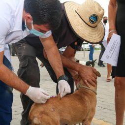Dia D de Vacinação Antirrábica para cães e gatos em 55 pontos neste sábado